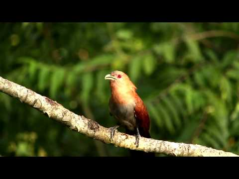 Reserva Forestal San Jorge - Arauco Argentina, Misiones.