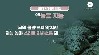 파충류 중에 가장 크고 강한 치악력을 가진 '바다악어'…