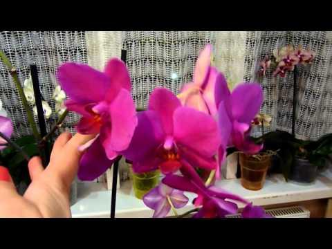 Что делать с орхидеями после цветения