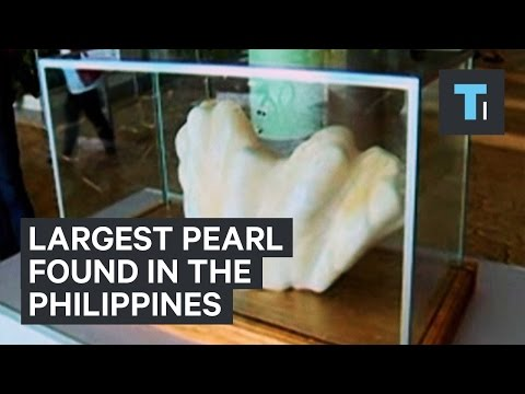 Largest pearl found in the Philippines