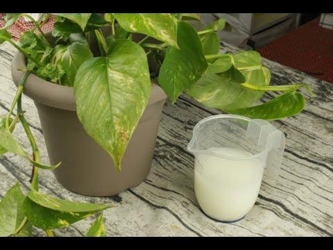 Yogurt scaduto: 3 modi per riutilizzarlo!