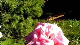 Танец цветов(Это видео создано с помощью видеоредактора YouTube (http://www.youtube.com/editor) Мир гармония красота., 2015-03-15T16:25:59.000Z)
