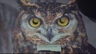 Phil's intense Owl stare-off!