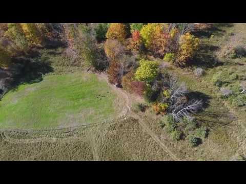 Drone Captures Deer & Turkeys Enjoying Food Plots