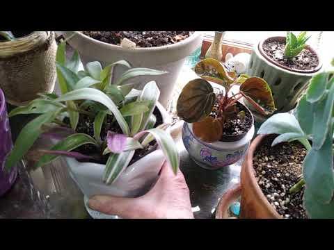 Plant Haul: Updates💖