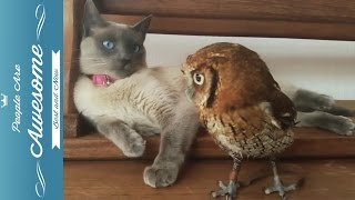 Cute Owls Compilation HD