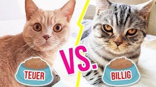 Katzen TESTEN teuerstes Katzenfutter vs billigstes | XLAETA