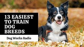 13 Easiest Trained Dog Breeds