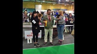 International Dog Show RIGA WINNER `17 Russian Toys