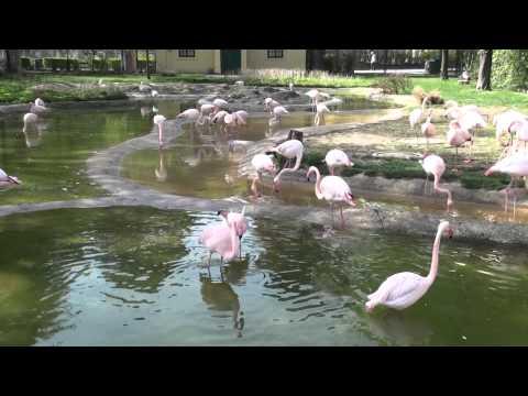 Tiergarten Schonbrunner - Zoo Vienna, Apr 2011 (1/2)