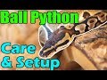 How to Care for Ball Pythons!