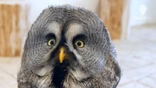 【東京・渋谷】原宿に12月23日、フクロウの体験型テーマパーク「フクロ...