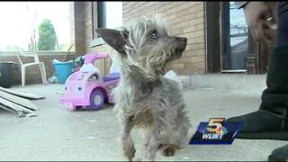 Miniature Yorkie's owner seeking justice after dog is attacked