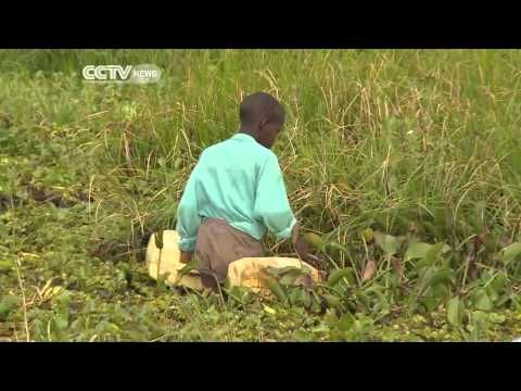 Aquatic Weeds Choking Lake Kyogo In Uganda