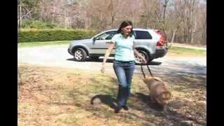 Kurgo Leash Zip Line Combo - Practical car restraint for your dog. Thumbnail