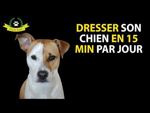 Education Du Chiot - 15 techniques à savoir - Professionnel - En 15 minutes
