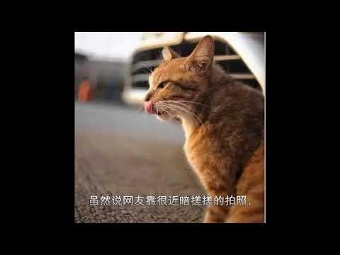 最纯正的土猫,中国狸花猫美到炸裂,不比折耳猫布偶猫差