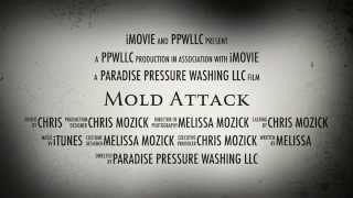 Mold Removal Services - Hawaii (Ph. 808-457-9301)