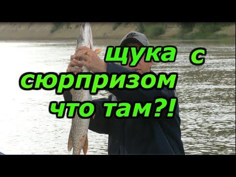 рыбалка на щуку.  сплав по реке.  рыбалка с ночёвкой, и уха из щуки