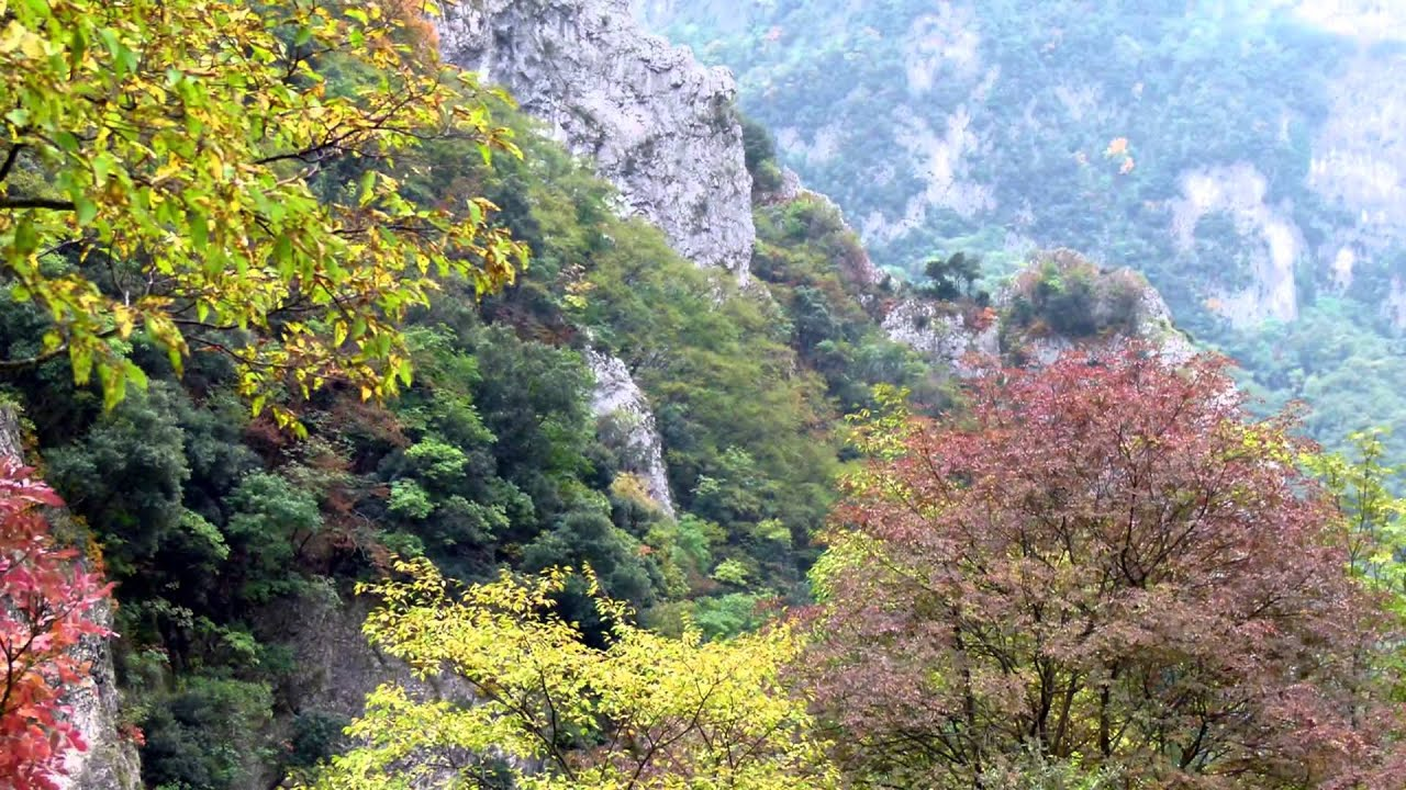 Alberi in autunno paesaggi sfondi desktop gratis sfondi hd for Sfondi autunno hd