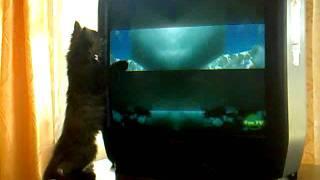 кошка упала).mp4(, 2012-02-20T13:25:50.000Z)