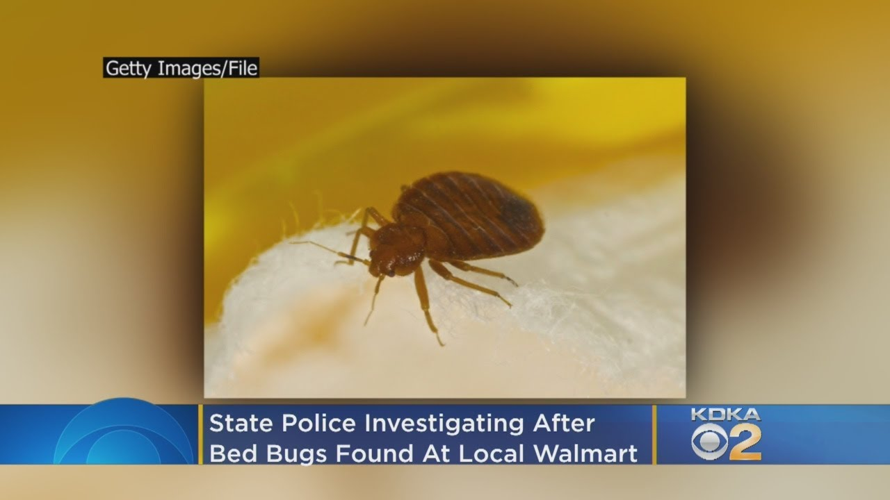 Police Investigating After Bed Bugs Found At Local Walmart Youtube