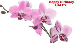 Haley - flowers - Happy Birthday