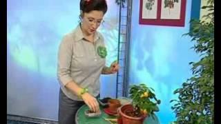 Биология 11. Разновидности корней растений — Академия занимательных наук