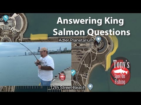 Answering King Salmon Questions (Chicago)