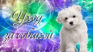 Уход за собакой/ мальтезе/ Кристина&Марчик