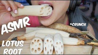 ASMR Lotus Root (EXTREME SATISFYING CRUNCH EATING SOUNDS) No Talking | SAS-ASMR