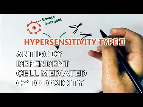 Antibody Dependent Cell Mediated Cytotoxicity or Hypersensitivity Type II