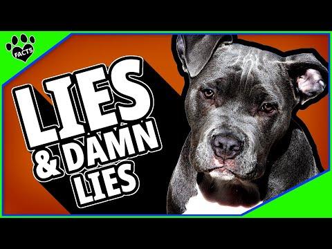 Lies and DAMN Lies About Pit Bulls