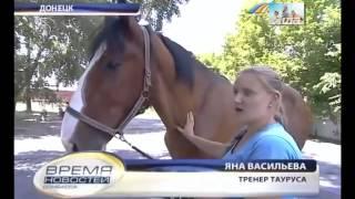 Конь великан Единственный в Украине