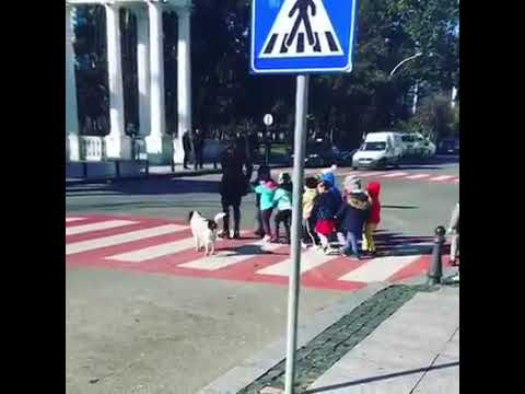 Andy Woods - SLOW DOWN...says the crosswalk dog.