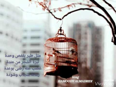 حاتم العراقي مثل طير بقفص . HAMOODY ALMADRIDI