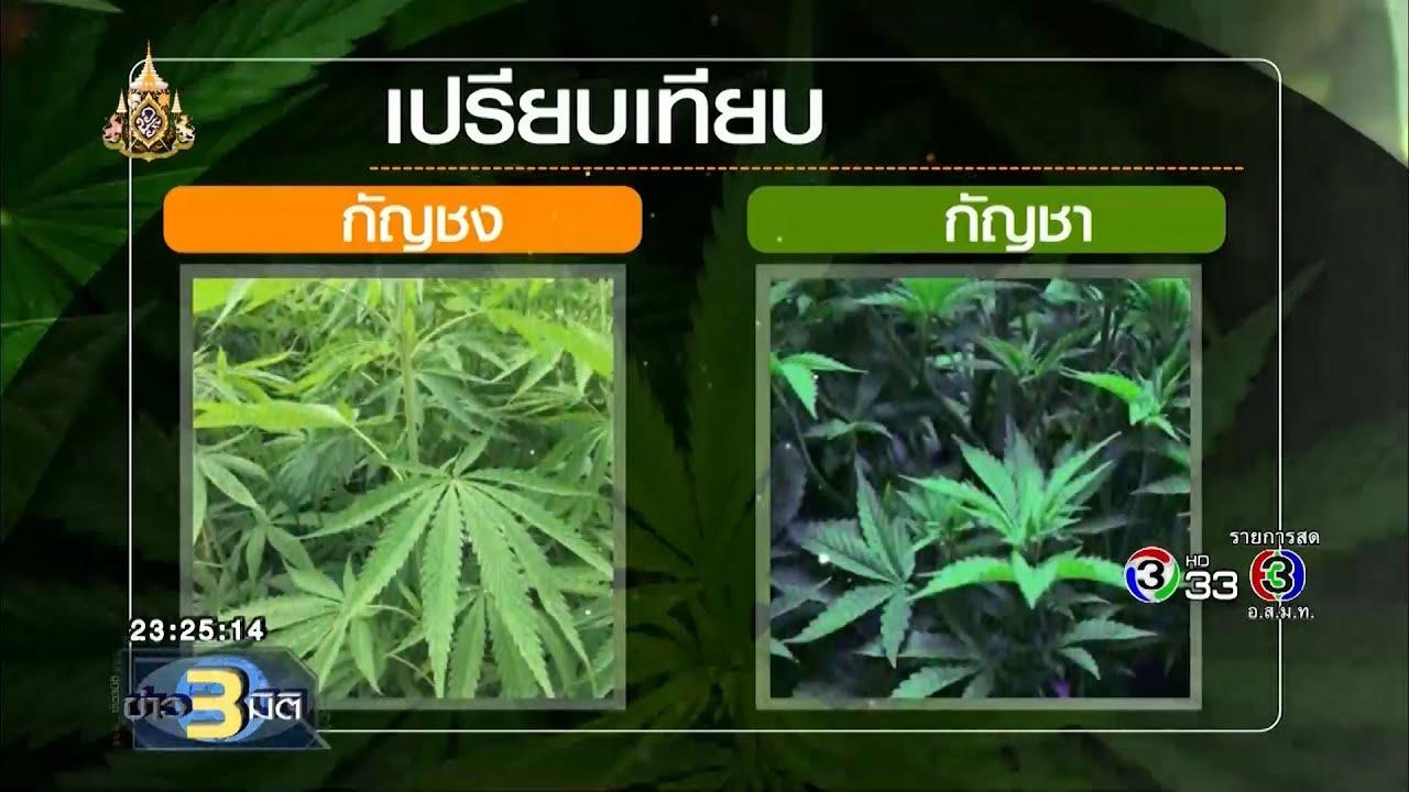 ข่าว3มิติ ปปส.เตรียมผลักดันกัญชงเป็นพืชเศรษฐกิจ  (25 กรกฎาคม 2562)