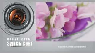 Как лучше снимать макро? (Раздел)(Видеоролик, открывающий раздел о макрофотографии. В самом финале видео ссылки на ролики раздела про макро...., 2014-03-23T07:39:26.000Z)