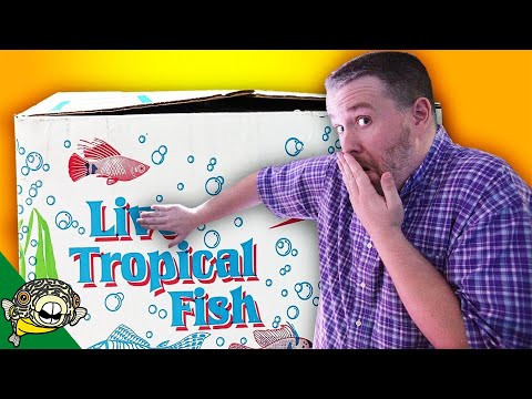 THESE FISH ARE MINE - PET STORE TROPICAL FISH UNBOXING