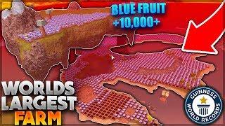WORLDS LARGEST FARM *GOT DESTROYED* (Blue Fruit, Blood Fruit Farm) | Roblox: Booga Booga