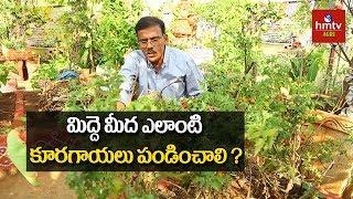 ఇంటి ఆవరణలోనే పంటల సాగు ఎలా?  | Terrace Gardening Tips By Raghotham Reddy | hmtv Agri