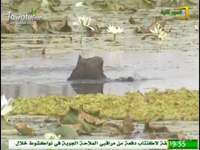 موريتانيا الأعماق - المناطق الرطبة التي تزخر بها ولاية الحوض الغربي- قناة الموريتانية