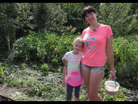 Посев сидератов на осень. Горчица и фацелия (укр)