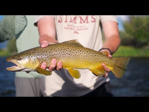 Swinging BIG Chubbies For Brown Trout In Ennis, Montana (fly Fishing)