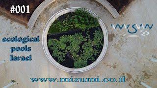 Mizumi || מיזומי - Ecological Pools Israel - 001