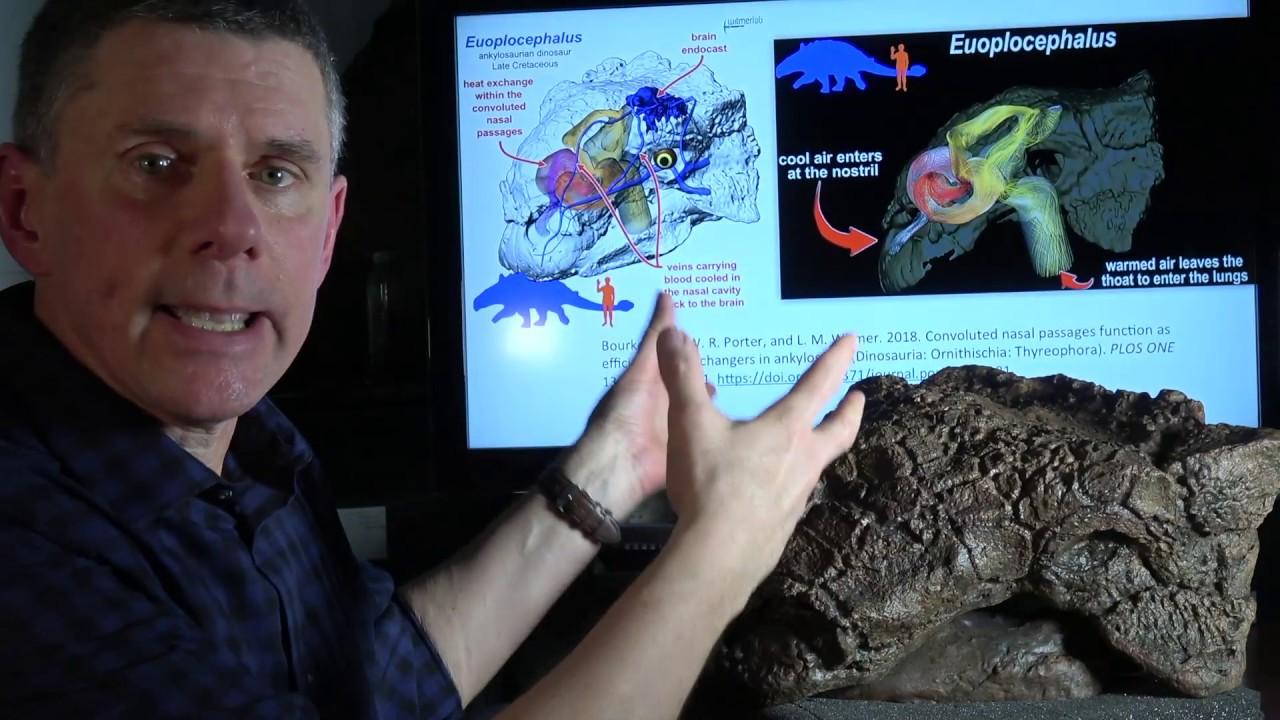 3D printed krazy-straw nasal cavity in ankylosaur Euoplocephalus