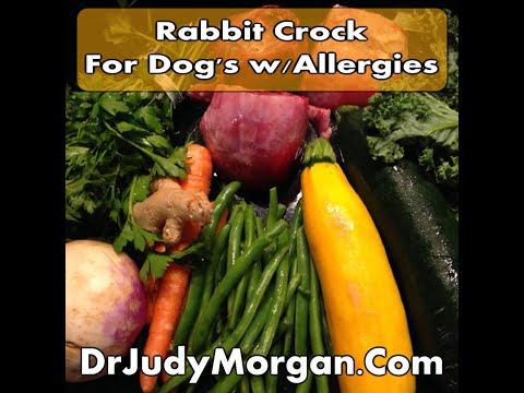 Treating Dog Allergies Naturally