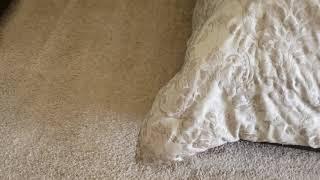 Man vs Dirty carpets Episode 30: Making white carpets.........white again