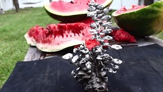 Pouring Molten Aluminum In A Watermelon  Awesome Surprise! - Hd