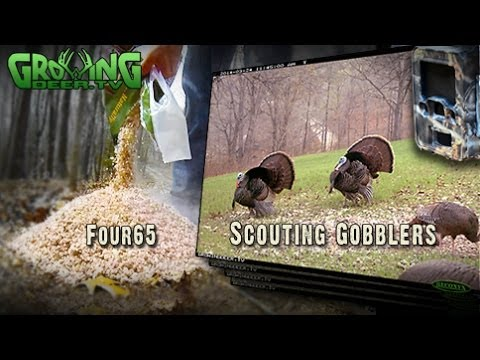 Turkey Hunting: How To Scout For Gobblers (#227) @GrowingDeer.tv